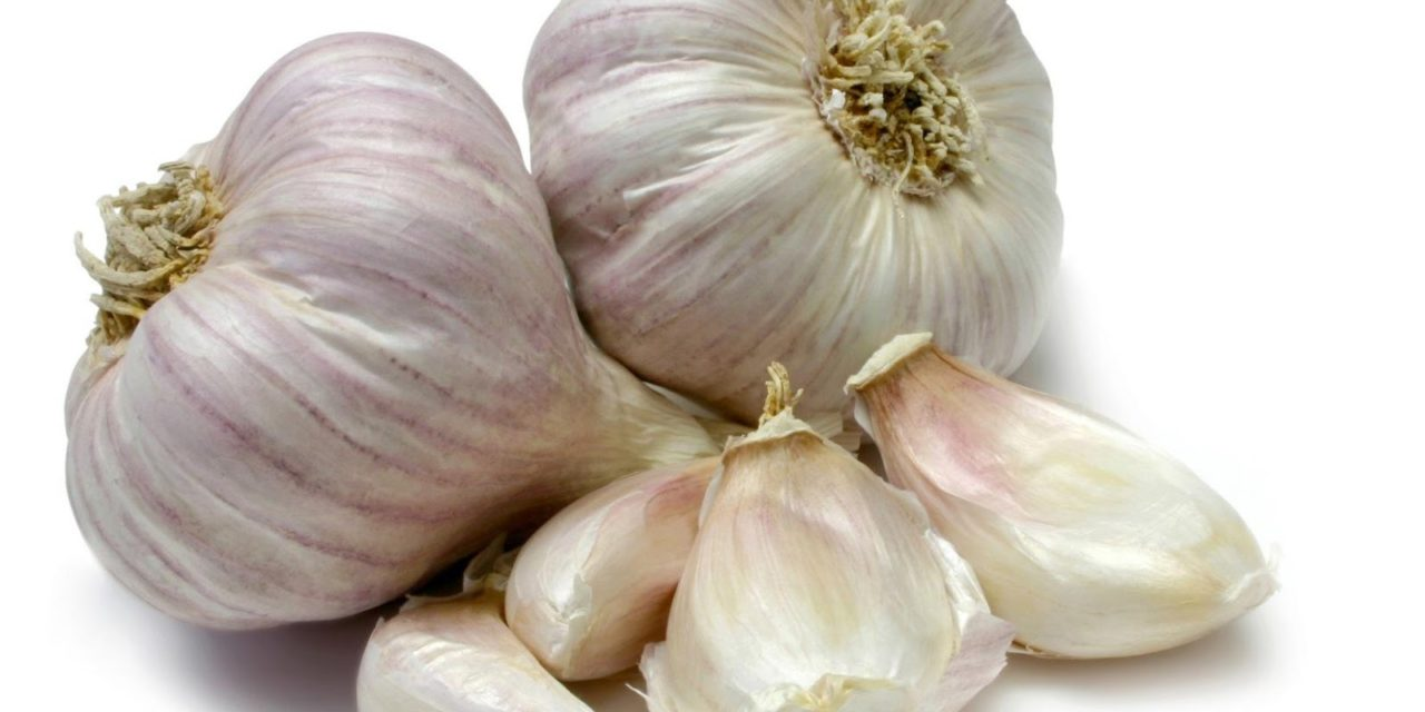 Can Chickens Eat Garlic?