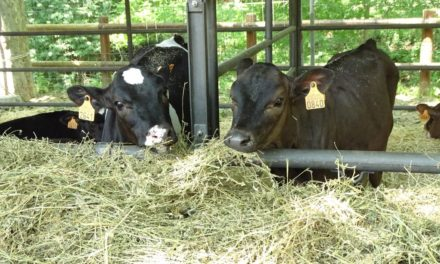 Types of Hay for Cattle