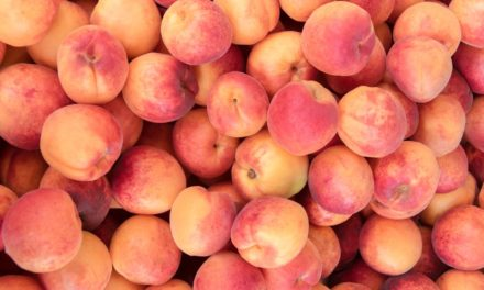 Can Cows Eat Peaches?