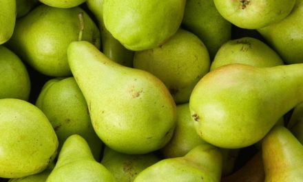 Can Cows Eat Pear?