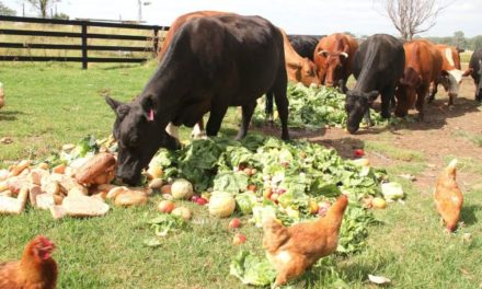 Can Cows Eat Vegetables?