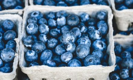 Can Sheep Eat Blueberries?