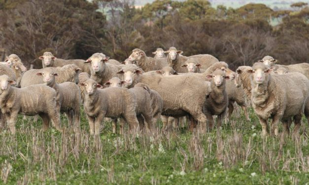 Can Sheep Eat Hemp?