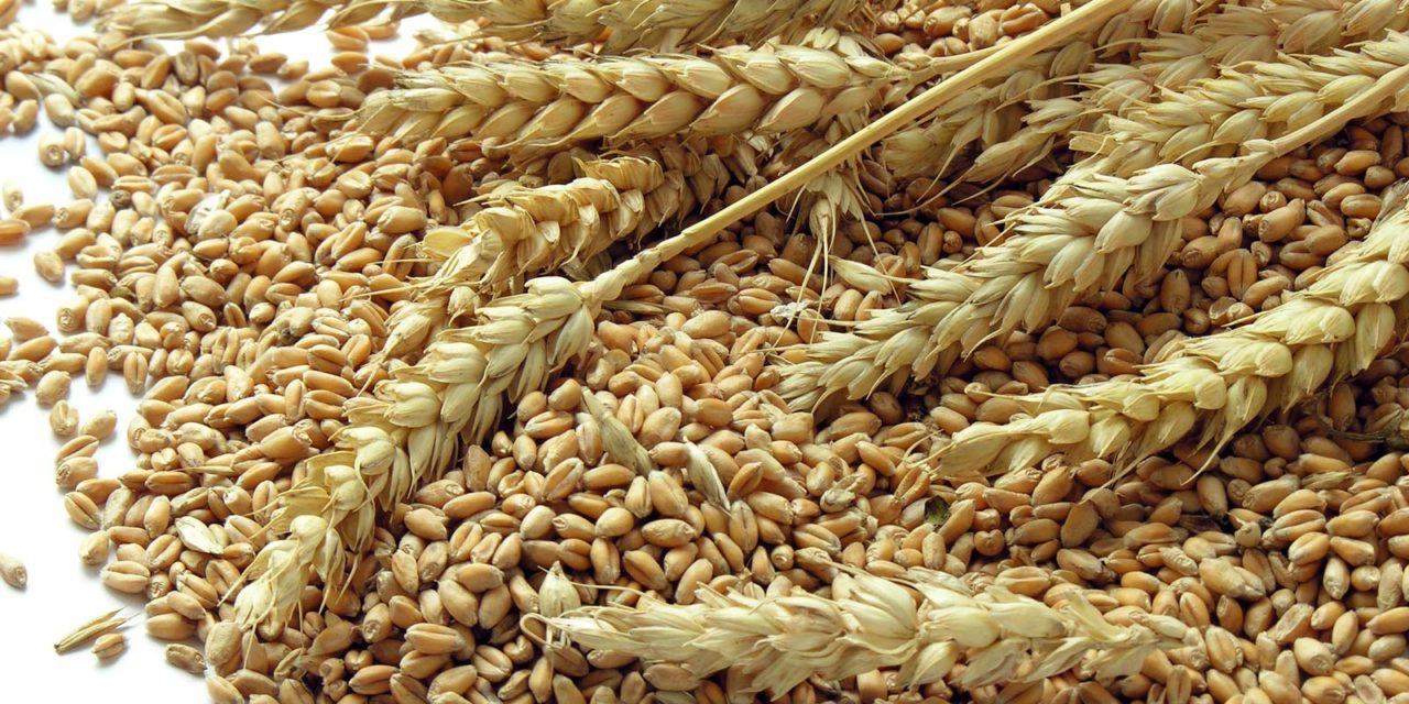 7 Types Of Cereal Crops